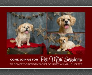 PET MINI SESSIONS at Kristina Lynn Photography & Design