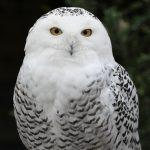 Owl Prowling