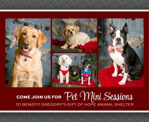 PET MINI SESSIONS at Kristina Lynn Photography &am...