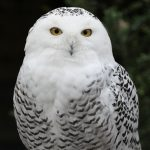 Owl Prowling at the Belwin Conservancy
