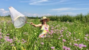 Establishing and Restoring Prairies for Native Plants and Wild Bees: Researching what drives success