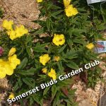 Somerset Buds Garden Club Annual Plant Sale