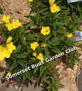 Somerset Buds Garden Club Annual Plant Sale