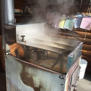 Maple Syruping Day