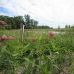 Lake Elmo: Planting for Clean Water - Wonderful Wetlands workshop