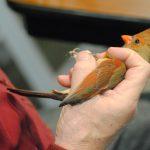 Public Bird Banding