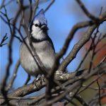 Wisconsin Bird Hike