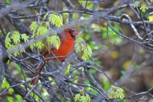 Bird Hike at St. Croix Bluffs Regional Park