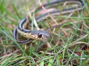 Snake Discovery Evening Program