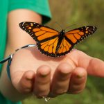 Monarch Tagging at Freedom Park