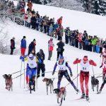 Dryland Skijoring Clinic