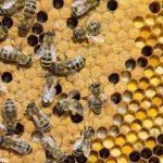 Beekeeping Made Easy!