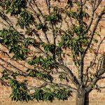 Pruning Shrubs & Trees