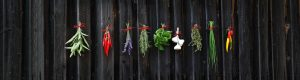 How to Grow and Preserve Herbs