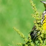 Bird Hike - Wisconsin Campus
