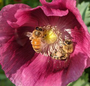 Bumble & Blossom Honey Tasting and Floral Design Workshop