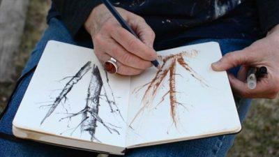 Explore, Discover, Create - Nature Sketchbook Workshop