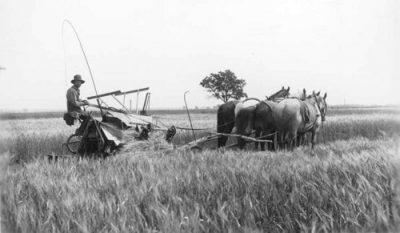 Grandfather's Grandfather: A Swedish Immigrant in Minnesota
