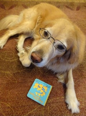 Read to a Dog at the Stillwater Public Library