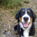 Canine Massage 101