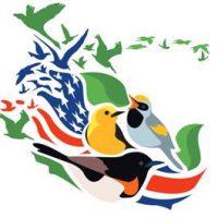 Bird Migration Celebration at Carpenter Nature Center
