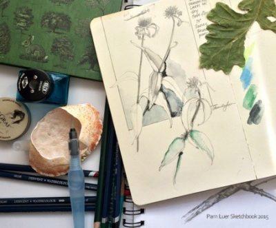 Nature Sketchbook Drawing Workshops