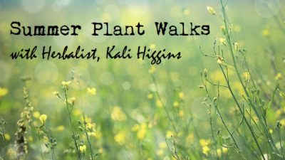Summer Plant Walks with Herbalist, Kali Higgins